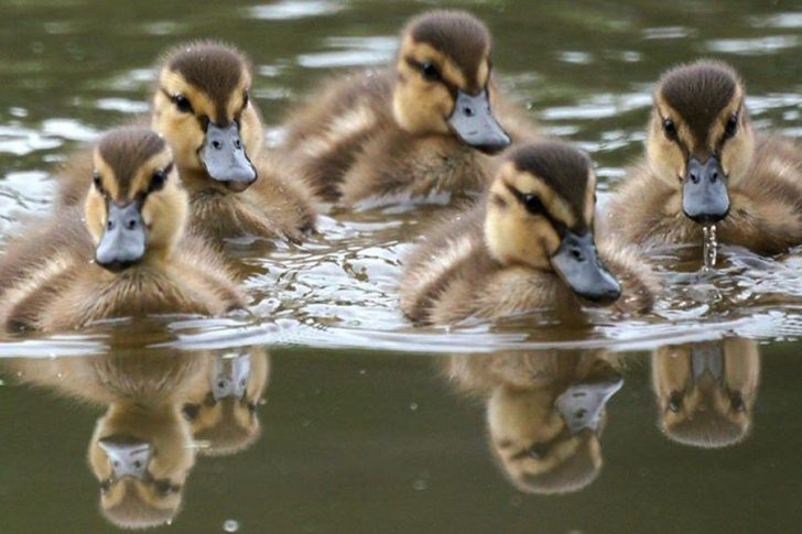 Feb. 21-23: Hatteras Village Waterfowl Festival