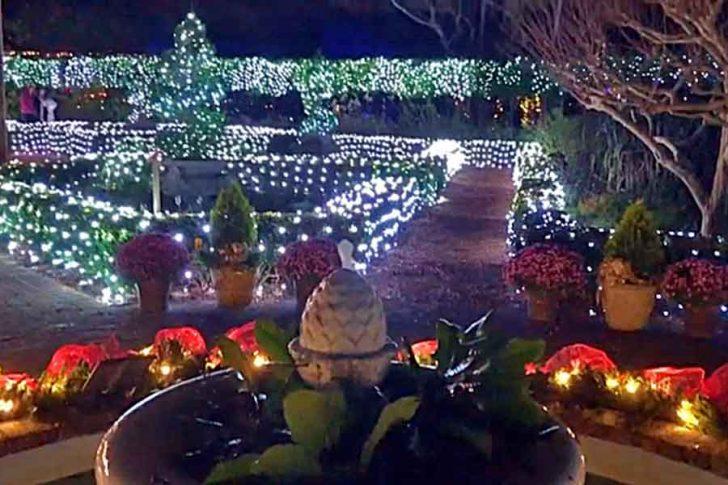 Winter Lights brighten the night at Elizabethan Gardens