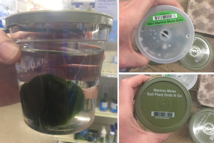 NC Wildlife warns that aquarium moss balls may contain invasive zebra mussels